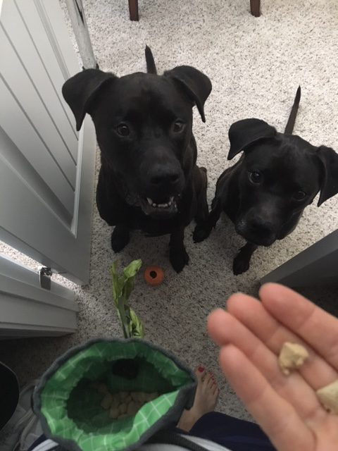 K9sOverCoffee | Rewarding The Pups For Finding Me In The Closet