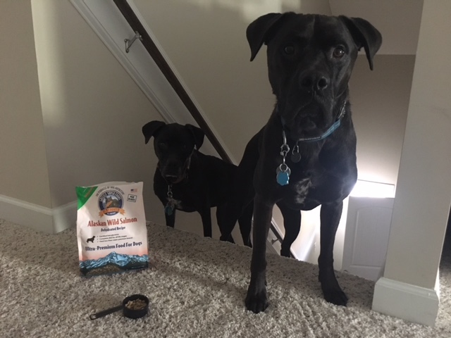 K9sOverCoffee | Dehydrated Dog Food Works Great For Our Indoor Stair Games