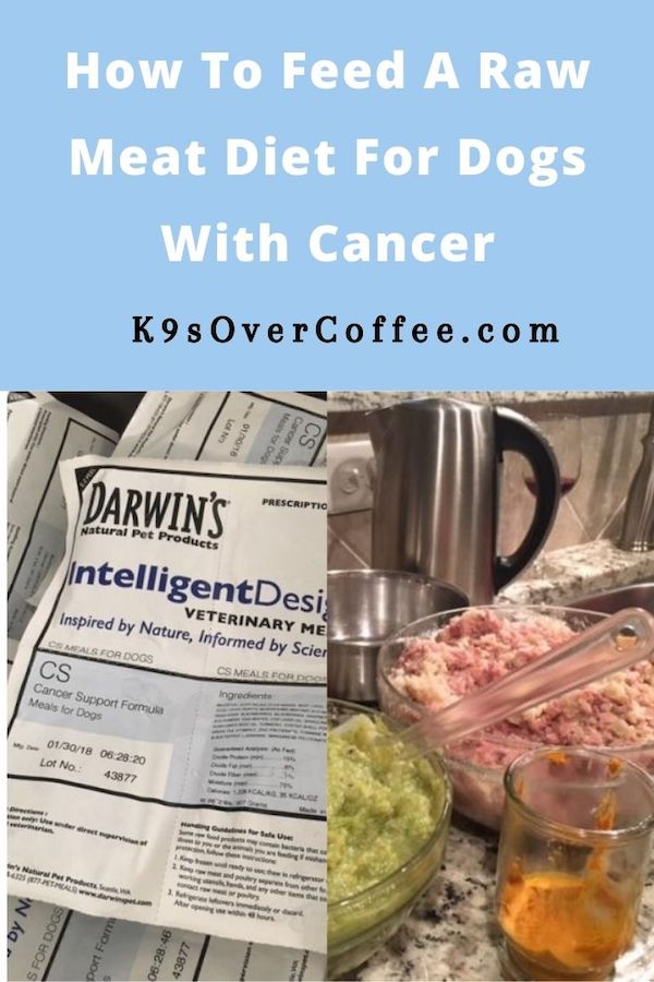 K9sOverCoffee.com | How to feed a raw meat diet for dogs with cancer