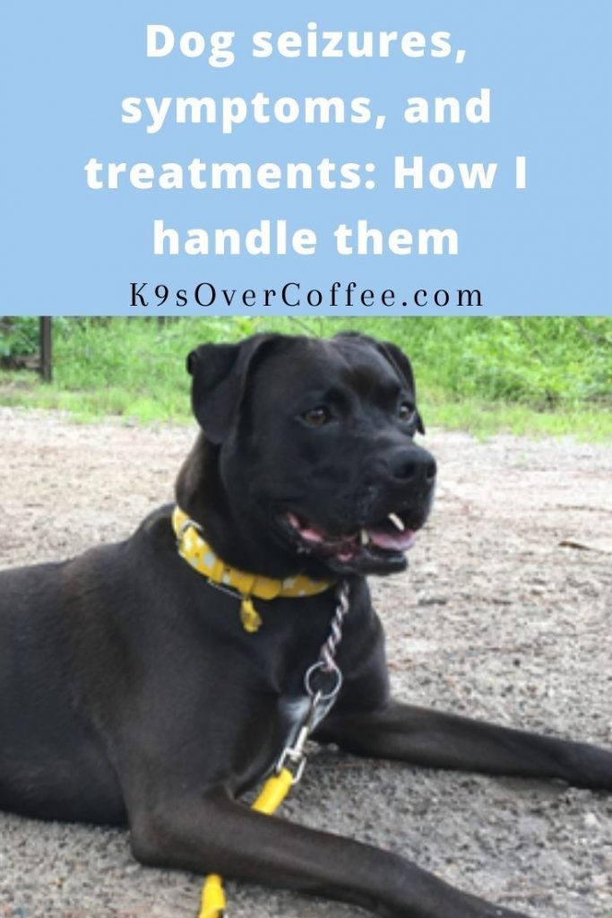 K9sOverCoffee.com | Dog seizures, symptoms, and treatments: How I handle them