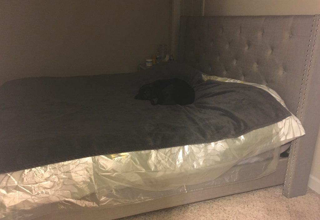 K9sOverCoffee.com | I lined my bed with a big plastic sheet after Missy had a seizure on it