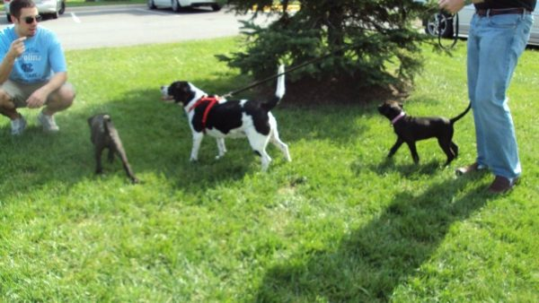 K9sOverCoffee | Puppies Missy & Buzz socializing with people and another pup