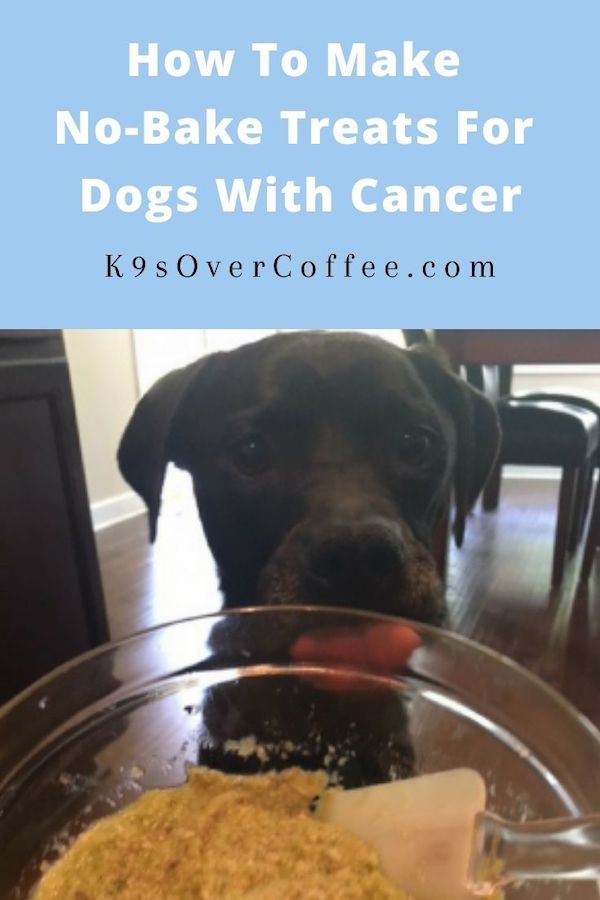 K9sOverCoffee.com | How to make no-bake treats for dogs with cancer