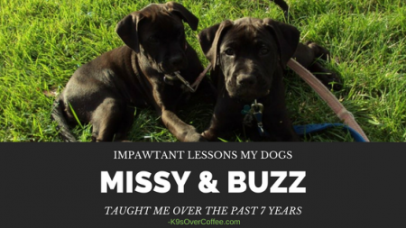 K9sOverCoffee.com | Impawtant Lessons My Dogs Missy & Buzz Taught Me Over The Past 7 Years