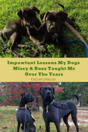 K9sOverCoffee | Impawtant Lessons My Dogs Missy & Buzz Taught Me Over The Years