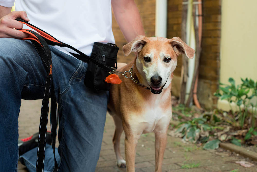 K9sOverCoffee   Mighty Paw's Dual Handle Leash In Black With Orange Accents