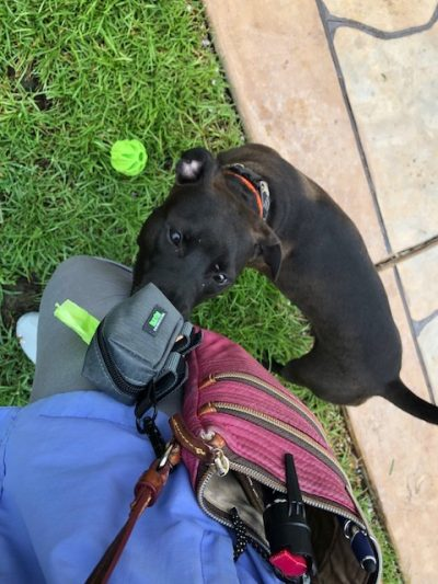 K9sOverCoffee   Mighty Paw's Poop Bag Holder Can Be Clipped To A Loop On My Cross-Body Purse