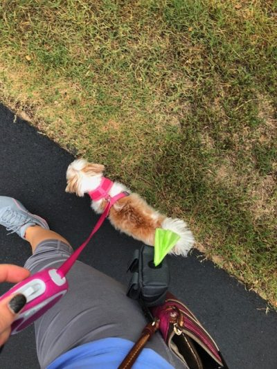 K9sOverCoffee | Mighty Paw's Poop Bag Holder Clipped To My Cross-Body Purse While Walking Client Dog Madison