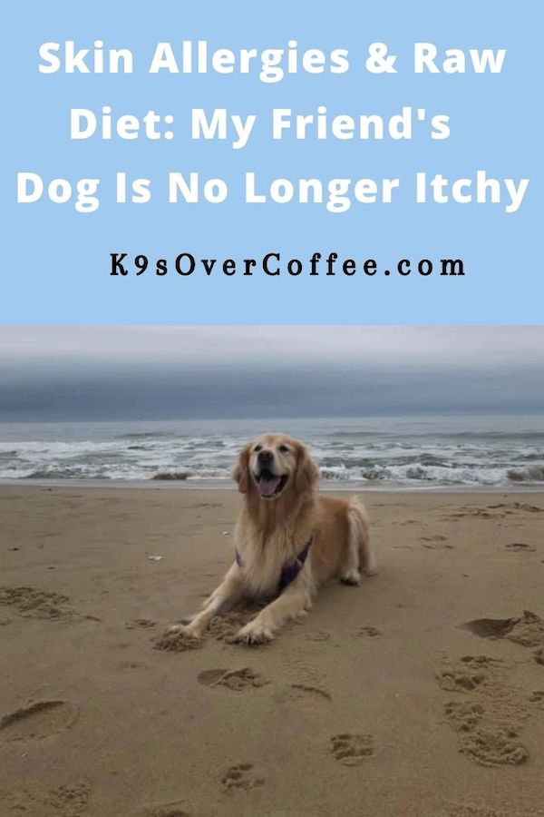 K9sOverCoffee.com | Skin Allergies & Raw Diet: My Friend's Dog Is No Longer Itchy