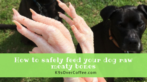 K9sOverCoffee | How to safely feed your dog raw meaty bones
