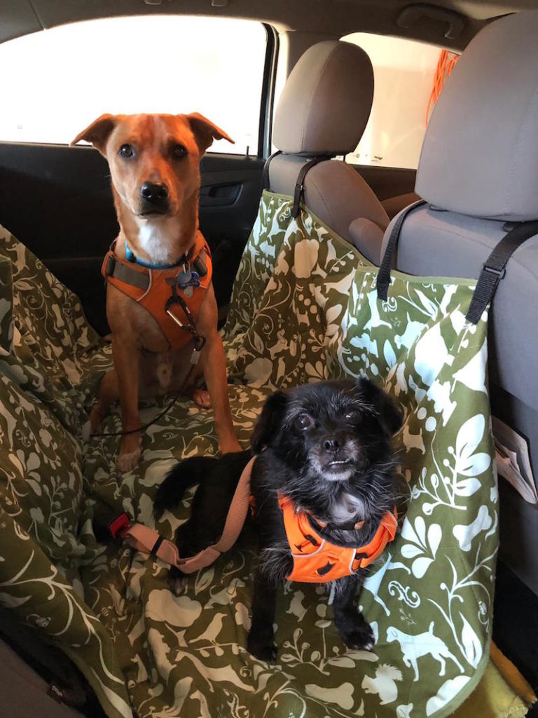 K9sOverCoffee | Wally socializing in the car with Miss Lila