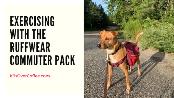 Exercising With the Ruffwear Commuter Pack