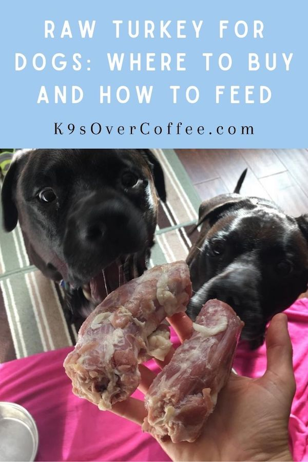 K9sOverCoffee.com | Raw Turkey For Dogs: Where to buy and how to feed