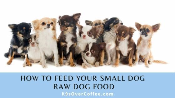 K9sOverCoffee | How to feed your small dog raw dog food