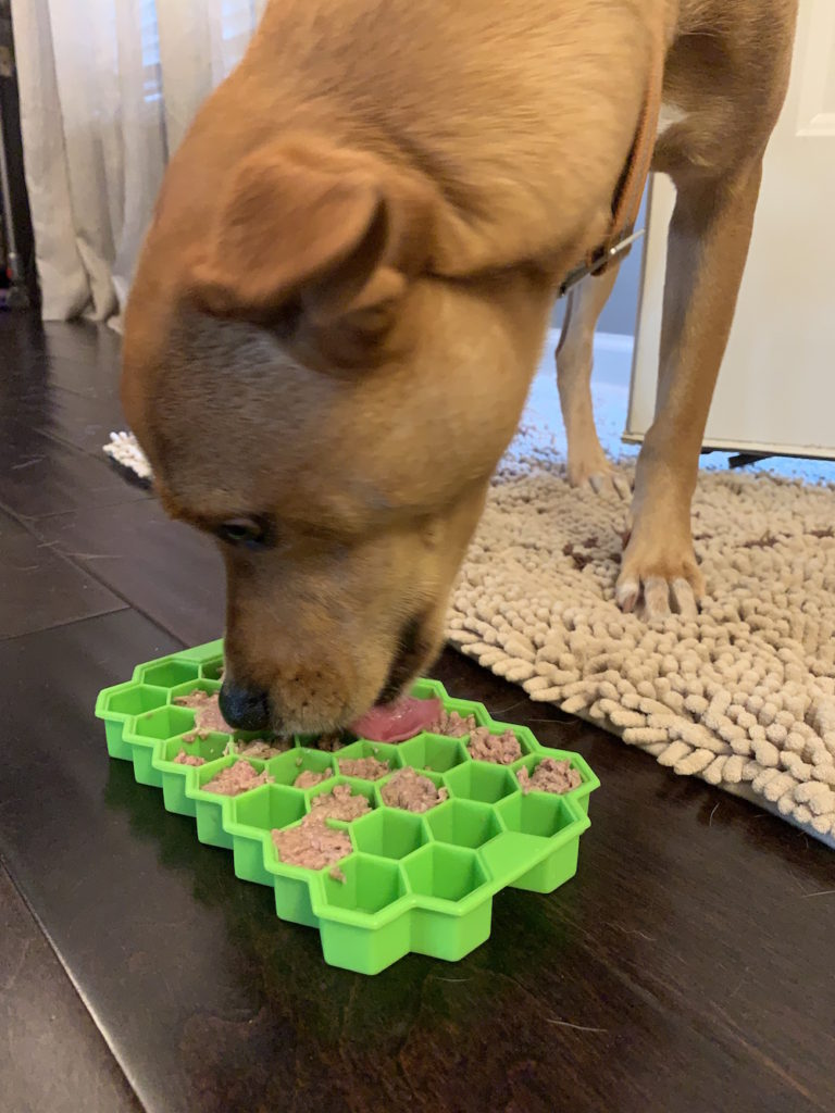 K9sOverCoffee | Wally eats his raw dog food out of dog slow feeder, an ice cube tray