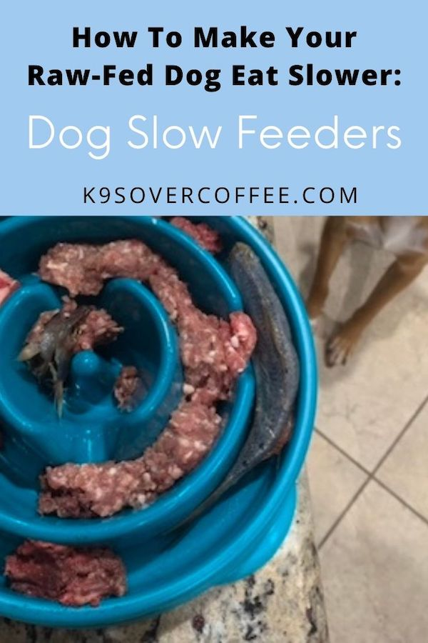 K9sOverCoffee.com | How to make your raw-fed dog eat slower: Dog slow feeders