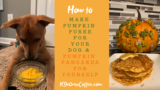 pumpkin for puppy constipation