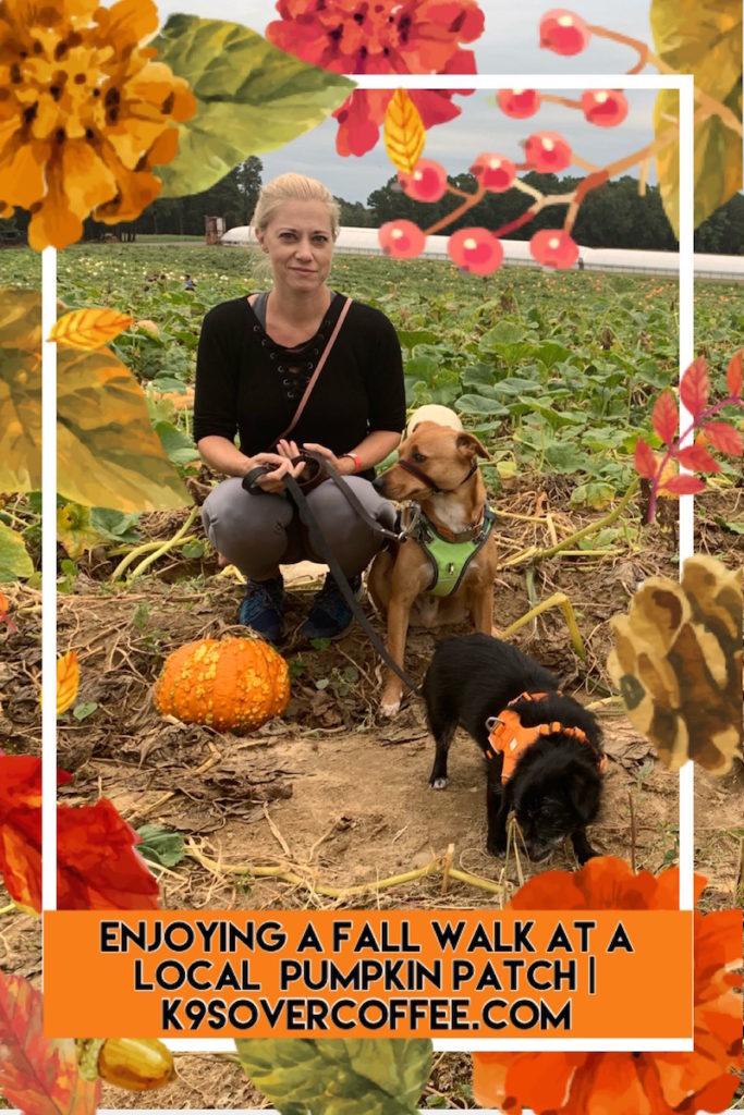 K9sOverCoffee.com   Enjoying a fall walk at a local pumpkin patch
