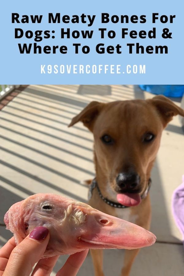 K9sOverCoffee.com | Raw meaty bones for dogs: how to feed and where to get them
