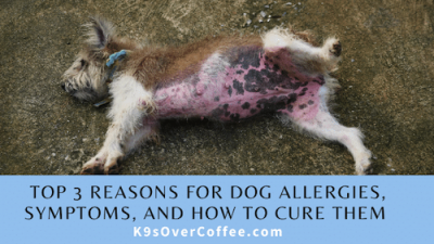 Top 3 Reasons for Dogs Allergies, Symptoms, And How To Cure Them