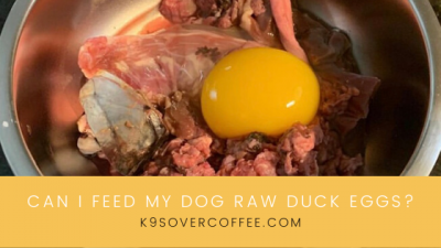 K9sOverCoffee | Can I feed my dog raw duck eggs?