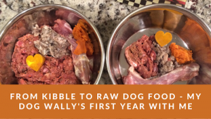 K9sOverCoffee | From kibble to raw dog food - my dog Wally's first year with me