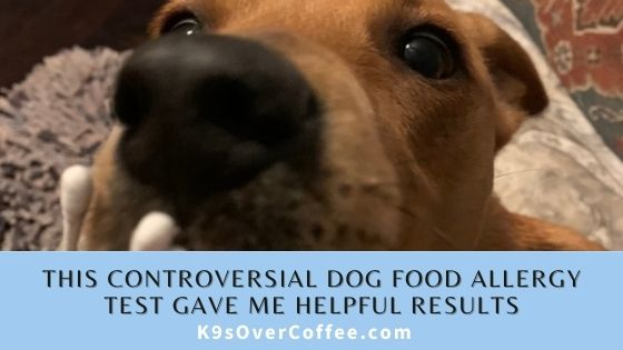 K9sOverCoffee | This controversial dog food allergy test gave me helpful results