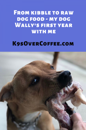 K9sOverCoffee.com | From kibble to raw dog food - my dog Wally's first year with me
