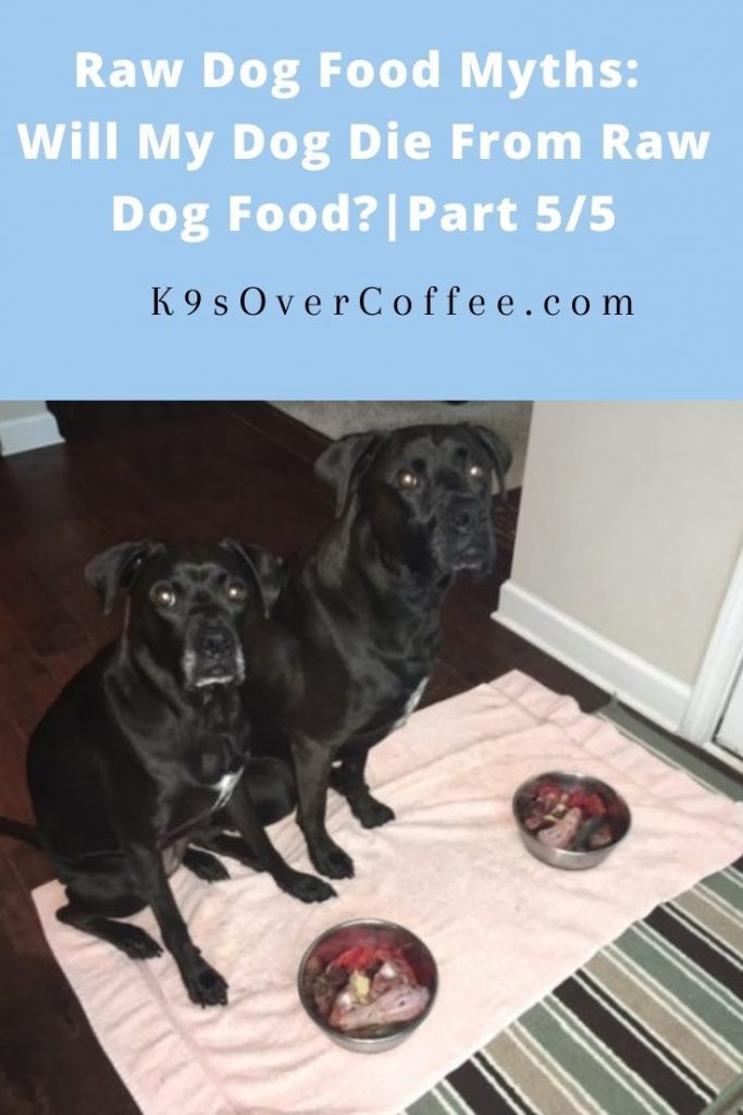 K9sOverCoffee.com | Raw Dog Food Myths: Will My Dog Die From Raw Dog Food? | Part 5/5