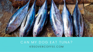 K9sOverCoffee | Can my dog eat tuna?