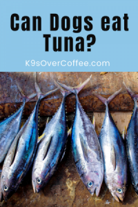 K9sOverCoffee.com | Can dogs eat tuna?
