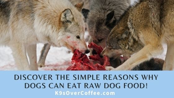 Discover the simple reasons why dogs can eat raw dog food