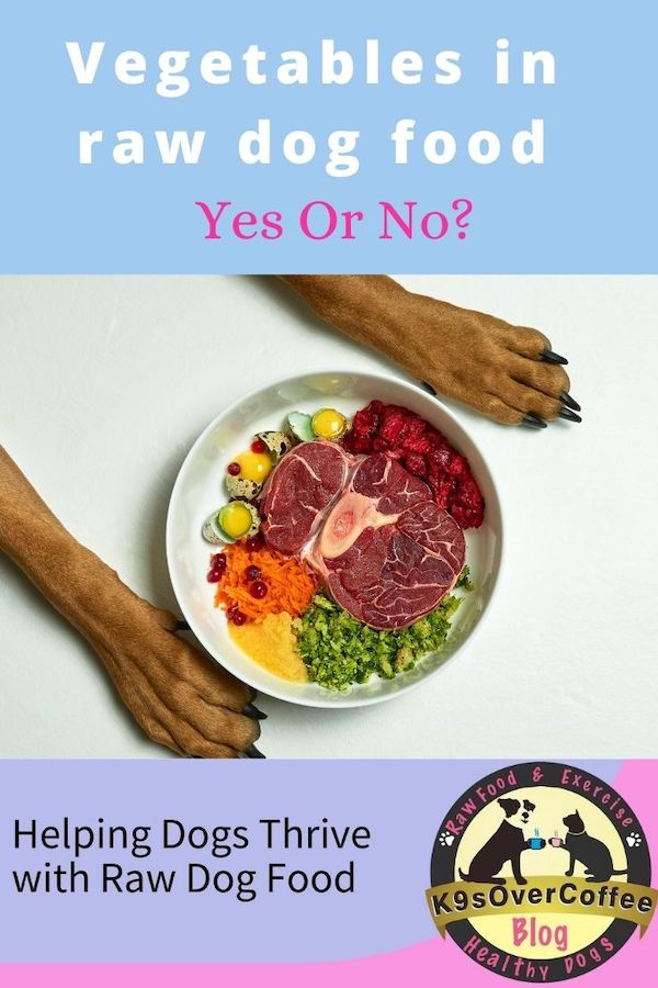 K9sOverCoffee.com | Vegetables In Raw Dog Food: Yes Or No?