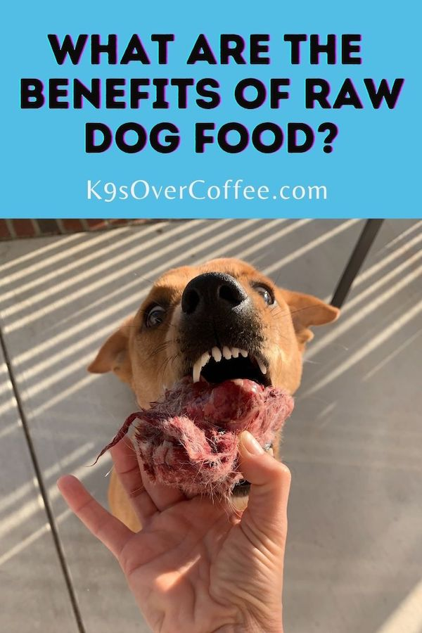 K9sOverCoffee.com | What are the benefits of raw dog food?