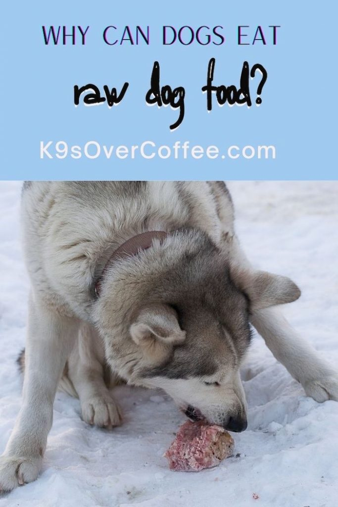 K9sOverCoffee.com | Why can dogs eat raw dog food?