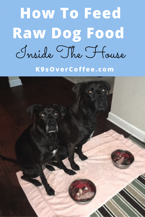 K9sOverCoffee.com | How To Feed Raw Dog Food Inside The House