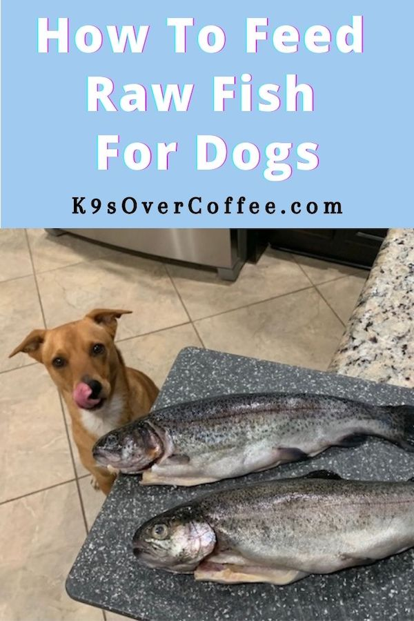 K9sOverCoffee.com | How to feed raw fish for dogs