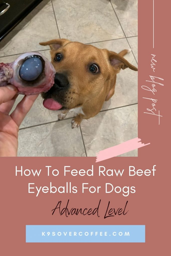 K9sOverCoffee.com | How to feed raw beef eyeballs for dogs - advanced level