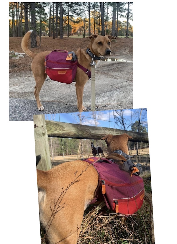 K9sOverCoffee.com | Wally and his Commuter dog backpack from Ruffwear