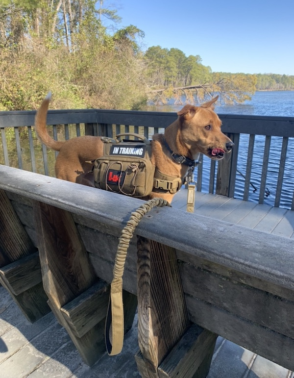 K9sOverCoffee.com | Wally and his dog backpack from One Tigris