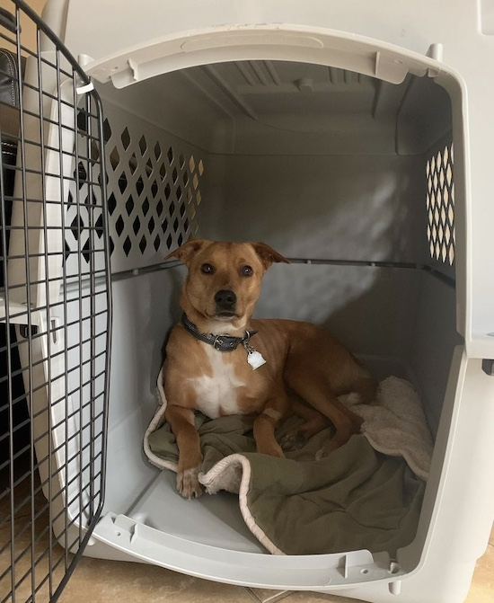 K9sOverCoffee | Feist mix Wally hanging out in his flight carrier