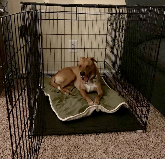 K9sOverCoffee | Feist mix Wally hanging out in his wire crate
