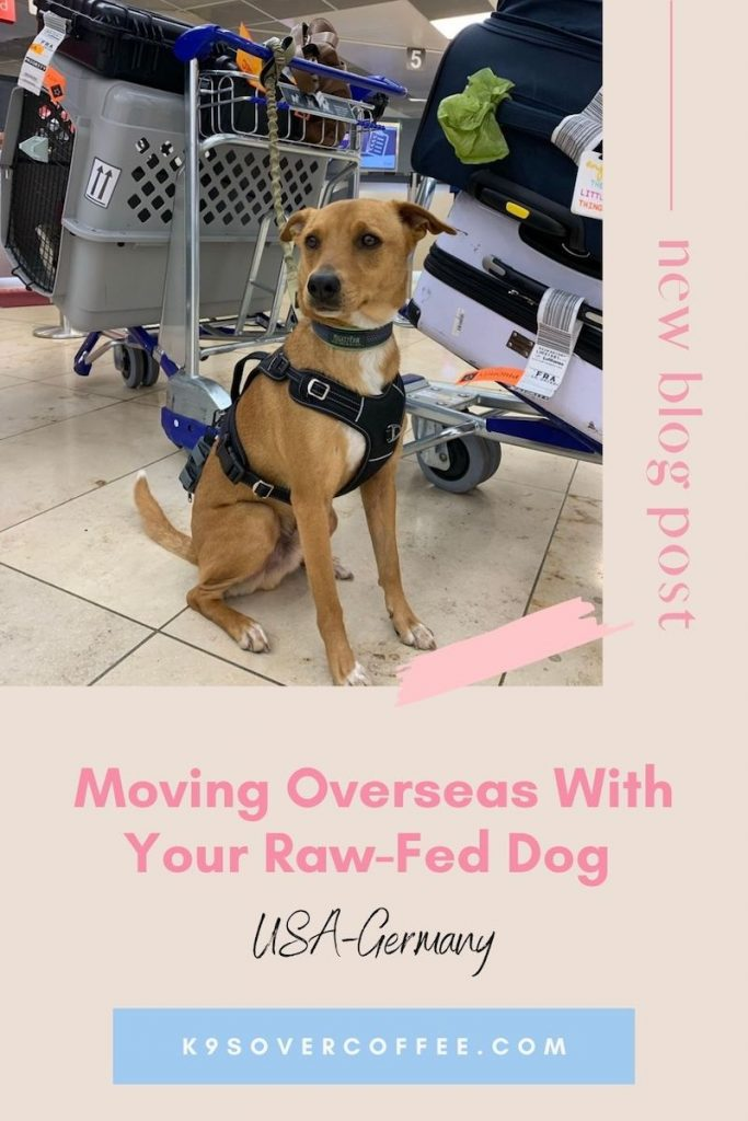 K9sOverCoffee.com | Moving Overseas With Your Raw-Fed Dog