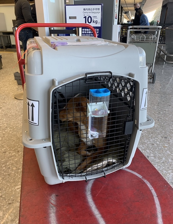 K9sOverCoffee.com | Moving overseas with your raw-fed dog: Wally's flight box