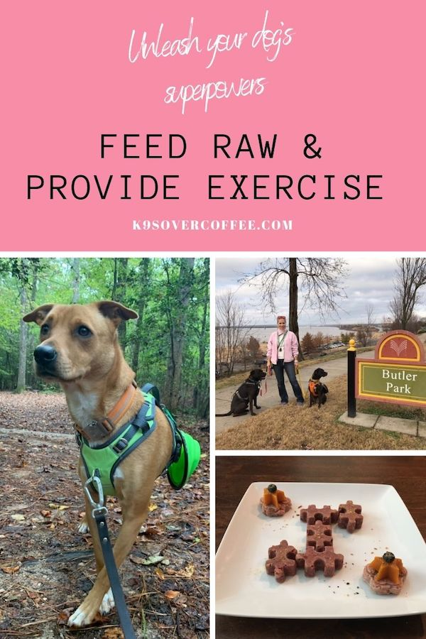 K9sOverCoffee.com | Unleash Your Dog's Superpowers with Raw Dog Food & Exercise.jpg