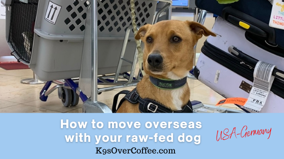 K9sOverCoffee.com | How to move overseas with your raw-fed dog