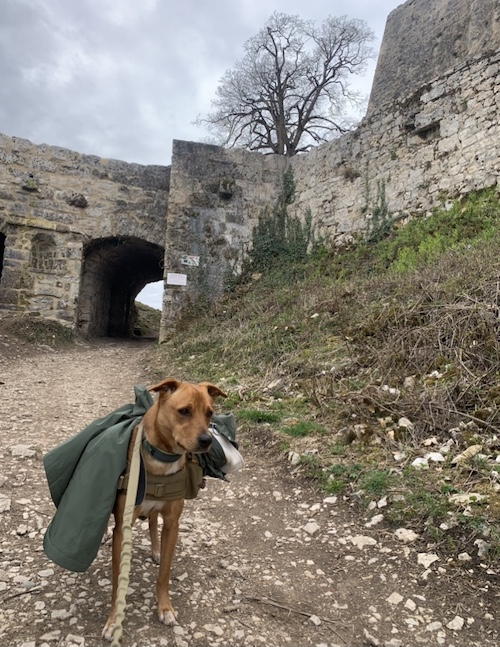 K9sOverCoffee.com | Dog-Friendly Hikes in Germany: We made it up the trail to the Fortress Hohenurach