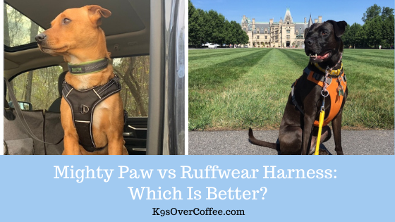 K9sOverCoffee | Mighty Paw vs Ruffwear Harness: Which Is Better?