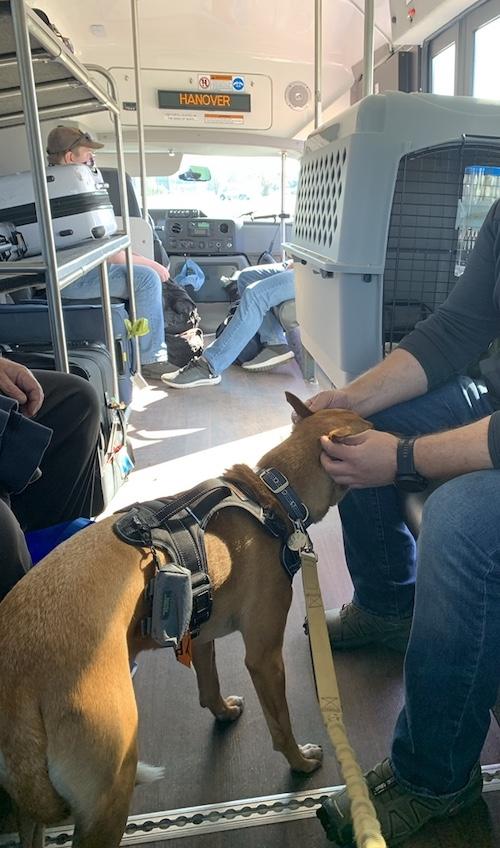 K9sOverCoffee.com |  Wally porte le Mighty Paw Sport Harness 2.0 dans un bus de transit à l'aéroport de Washington Dulles