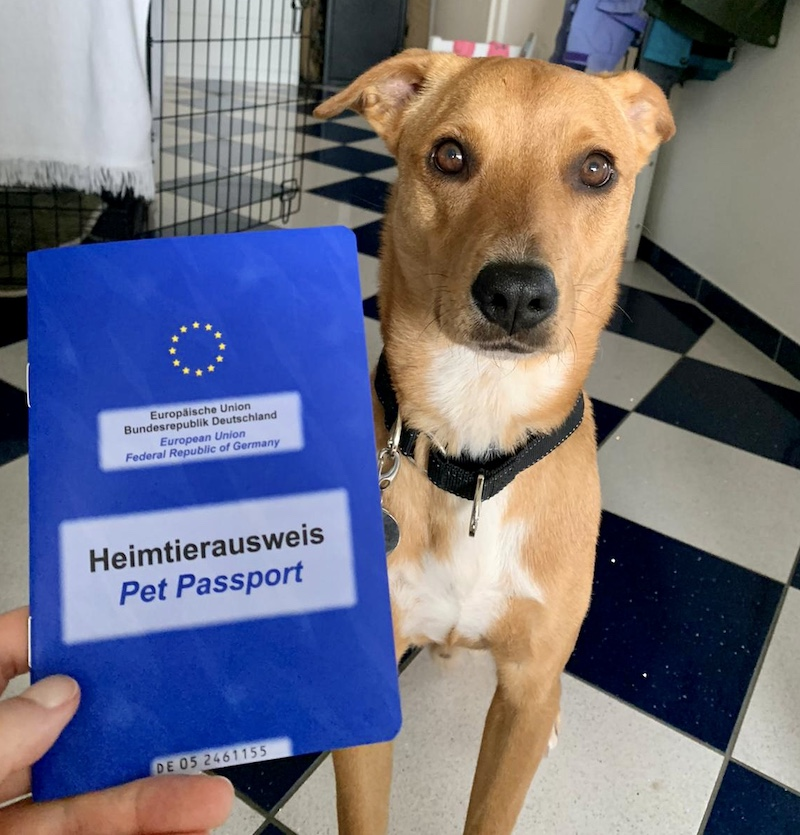 K9sOverCoffee.com | Croatia with dogs - Wally and his pet passport